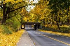 Leaf Tunnel